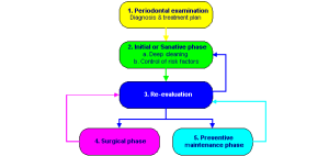 09-The Periodontic Process