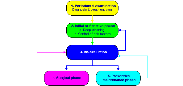 09-The Periodontic Process