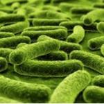 dental plaque bacteria